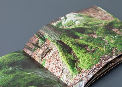 Crónica de un bosque encantado